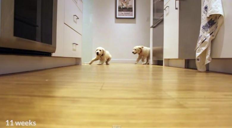 puppies dinner